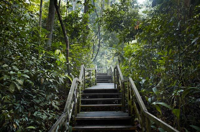 fourth-avenue-residences-bukit-timah-nature-reserve