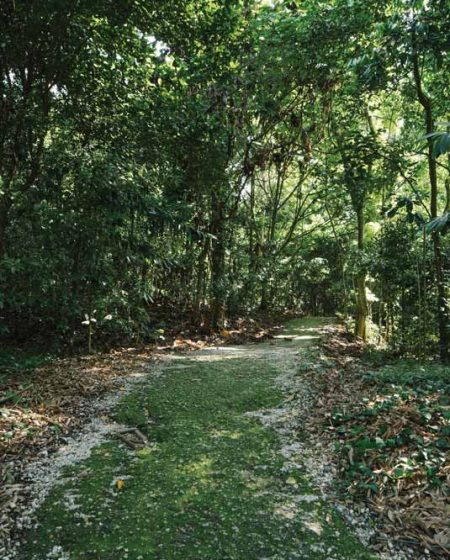fourth-avenue-residences-new-launch-condominium-bukit-timah-nature-reserve